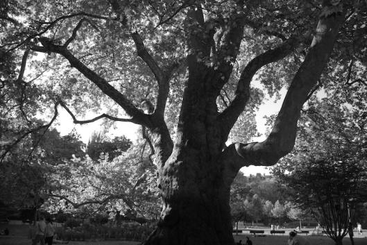 003_arbre jardin NB 740