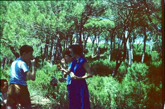 4_004_pineta toscana corrigé (2) 180