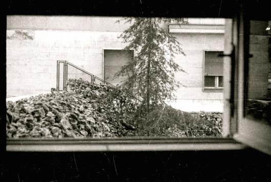 001_finestra