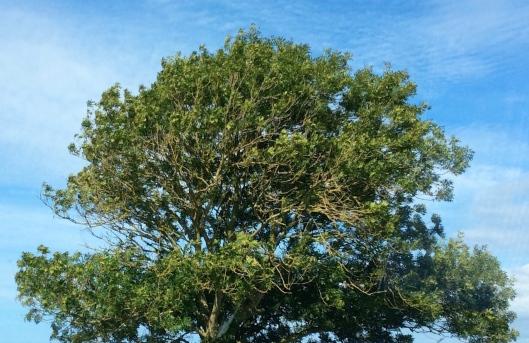 002_arbre 180