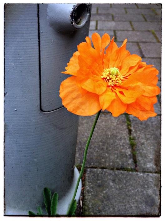 003_fleur de laurence 180