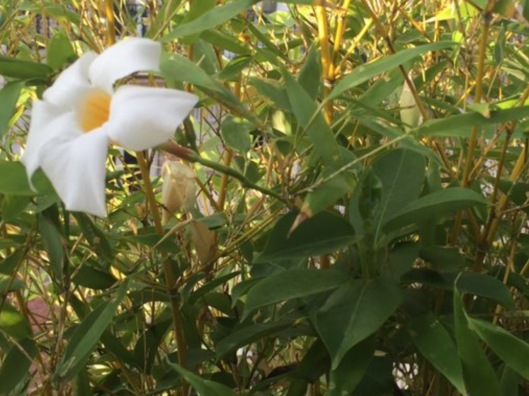 002_fleur-02