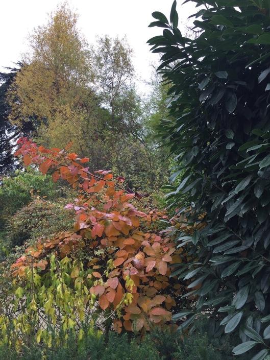 004_automne-lebel